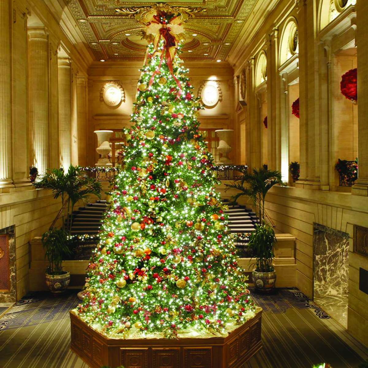 Chicago Christmas.Five Must See Christmas Trees In The Chicago Loop